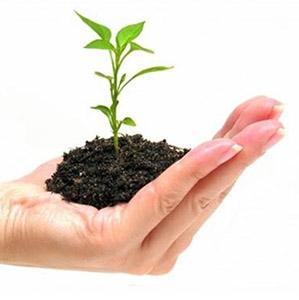 plant21